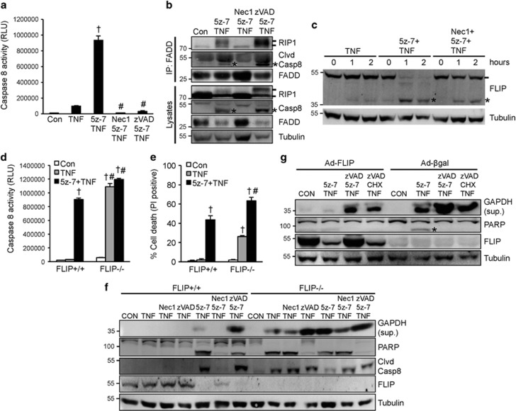 Inhibition of TAK1 triggers two caspase 8 activation pathways through induction of the RIP1-FADD-caspase 8 complex as well as FLIP degradation. ( a ) Caspase 8 activity in wild-type MEFs treated as indicated for 4 h. † P