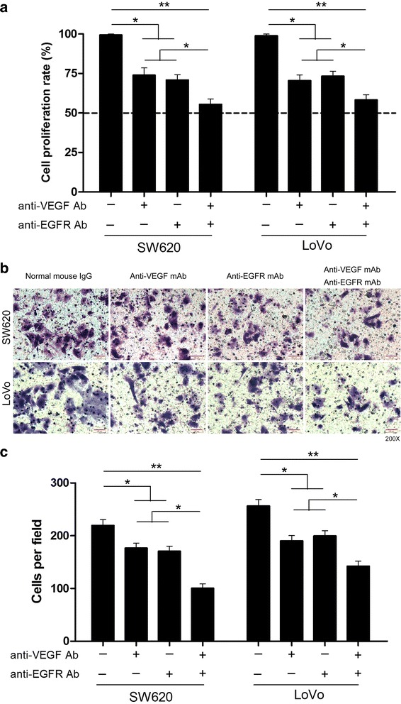 Combined application of anti-VEGF and anti-EGFR antibodies suppresses the proliferation and invasion of CRC cells in vitro. a The proliferation rate of SW620 and LoVo cells were analyzed by CCK-8 assay in different groups. b Invasion assay of SW620 and LoVo cells in different groups. c Invasion of SW620 and LoVo cells were quantitatively analyzed in different groups. Columns are the average of three independent experiments ± SEM. * P