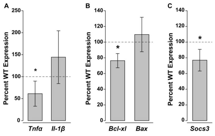 IL-6 deficiency alters baseline gene expression for neuroinflammation, cell health and gp130 regulatory signaling. Percent gene expression of ( A ) Tnfα , Il-β ( B ) Bcl-xl , Bax and ( C ) Socs3 mRNA in the IL-6−/− retina normalized to WT expression levels (dotted line) via the ΔΔCt method. Asterisks indicate p