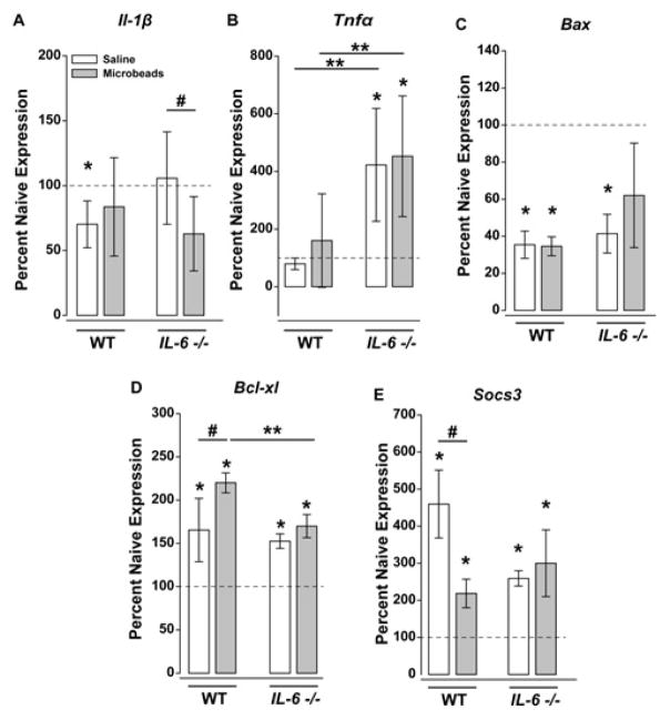 IL-6 deficiency influences glaucoma-related changes in gene expression of neuroinflammory, cell health and gp130 modulators. ( A–E ) Percent gene expression of ( A ) Tnfα , Il-β ( B ) Bcl-xl ( C ), Bax and ( D ) Socs3 ( E ) mRNA in either WT or IL-6−/− eyes injected with saline (white) or microbeads (gray). mRNA levels were normalized to respective naive expression levels (dotted line) via the ΔΔCt method. Statistical significance (p