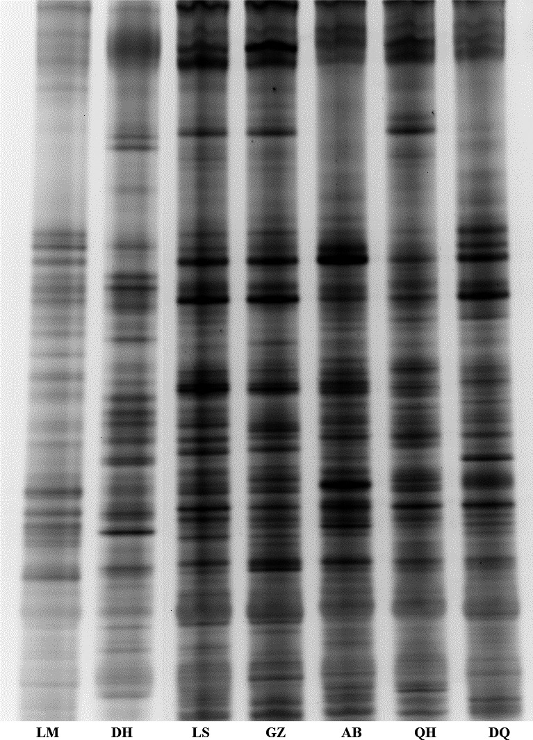 Denaturing gradient gel electrophoresis band profiles of the V3 region of 16S rRNA produced from the cecal bacterial communities of seven types of chicken. LM , Lohmann laying hens; DH , Daheng broiler chickens; LS , Lhasa Tibetan Chicken; GZ , Ganzi Tibetan Chicken; AB , Aba Tibetan Chicken; QH , Qinghai Tibetan Chicken; and DQ , Diqing Tibetan Chicken.