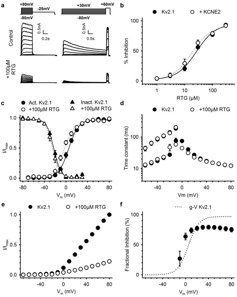 Retigabine inhibition of K V 2.1 is voltage-dependent. ( a ) Typical current recordings of K V 2.1 channels to determine the activation (left) and inactivation (right) properties, before (top) and after exposure to 100 μM retigabine (bottom). Voltage protocols are shown on top. ( b ) Concentration-effect relationship of K V 2.1 inhibition. Retigabine inhibition of K V 2.1 (closed circles) currents was not significantly different (p = 0.385) in the presence of KCNE2 (open circles). ( c ) Voltage-dependence of activation (circles) and inactivation (triangles) in absence (closed symbols) and presence (open symbols) of 100 μM retigabine. The voltage-dependence of activation was obtained by plotting the normalized tail currents (I/I max ) in the activation current traces from panel A as function of the prepulse potential. Retigabine induced a small but significant (p = 0.012) hyperpolarizing shift in the voltage-dependence of activation. The voltage-dependence of inactivation, obtained by plotting the normalized peak current (I/I max ) at +60 mV after a 5 s prepulse as a function of the prepulse potential, was not affected by retigabine. ( d ) Time constants of K V 2.1 channel opening (≥0 mV) and closing (