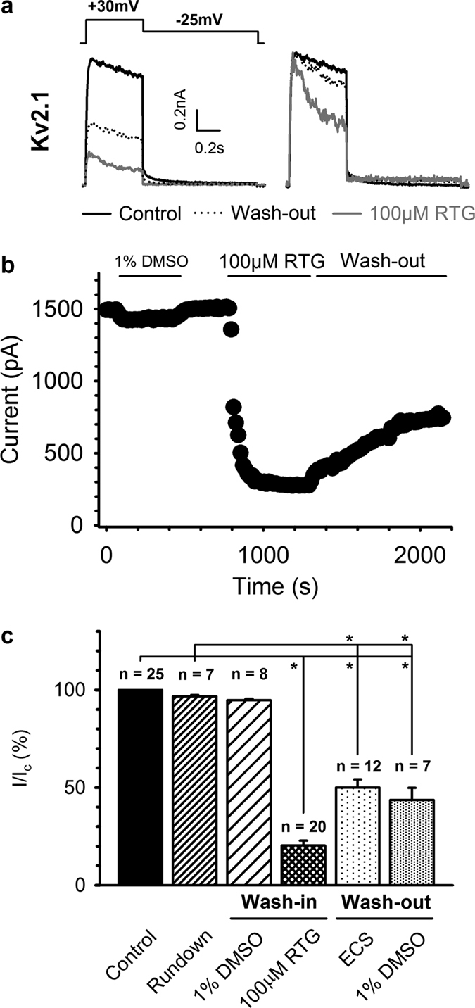 Inhibition of K V 2.1 current by retigabine is only partly reversible. ( a ) Representative K V 2.1 current traces (black) at +30 mV (left). The scaled current traces are shown in the right panel. Retigabine (grey) inhibited approximately 80% of the current but inhibition was poorly recovered 30 minutes after removal of retigabine (dotted). The 'apparent' acceleration of the inactivation process seen in the scaled current traces most likely reflects open-channel block by retigabine. ( b ) Plot of a representative wash-in/wash-out experiment. Inhibition of the K V 2.1 current occurred slowly, typically requiring 5–10 minutes to achieve saturation. Inhibition of K V 2.1 currents was poorly reversible and occurred extremely slow. ( c ) Bar chart illustrating the degree of current (I/I c ), with I the current at a given condition and I c the control condition. K V 2.1 inhibition was poorly reversible, independent of the solvent, and significantly different from current rundown. *Indicates statistical significance (p