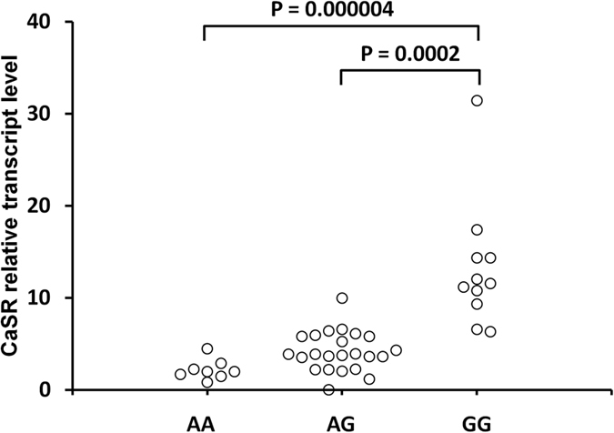 Effect of the CASR rs7652589 G > A polymorphism on CaSR transcript levels in PBMC obtained from HD patients. The PBMC from whole venous blood were isolated by Ficoll-Hypaque centrifugation (density, 1.077 g/cm 3 ) followed by total RNA isolation. Quantitative analyses of CaSR transcript levels were performed by RT and Q-PCR <t>SYBR</t> Green I system. The quantity of CaSR transcript in each sample was standardized by the geometric mean of reference PBGD and B2M cDNA levels.