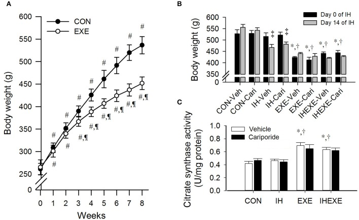 The effects of exercise on body weight at weeks 1–8 ( n = 20 animals per group) (A), intermittent hypoxia on body weight at weeks 9–10 ( n = 5 animals per group) (B) and exercise on citrate <t>synthase</t> activity ( n = 5 animals per group) (C) . # p