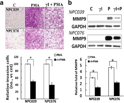 Blockade of N-cadherin cleavage decreased PMA-mediated cell invasion and MMP-9 level. a γI treatment decreased PMA-induced cell invasion. NPC cells were treated with γI in the inner well of the Boyden chamber, and PMA (100 nM) plus γI was introduced into the outer well for 24 h. Cells that invaded the lower surface of the filter were fixed, stained and photographed. Representative images and statistical plots of the invasion assay are shown. The relative cell invasion in the γI-plus-PMA–treated group was compared to PMA treatment alone. b γI treatment decreased the PMA-mediatedMMP-9 expression. NPC cells were pre-treated with γI (5 μM), then exposed to PMA for 24 h. Cell lysates underwent immunoblotting with the indicated antibodies. The relative MMP-9 expression was compared with the control group (PMA-untreated cells); N = 3, * P
