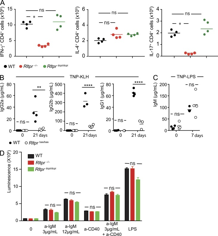 Th differentiation and B cell responses in mice deprived of functional RLTPR molecules. (A) Sorted naive CD4 + T cells (2 × 10 5 ) from mice of the specified genotype were stimulated for 5 d with anti-CD3 and -CD28 under Th1, Th2, or Th17 differentiating conditions. After 5 d of culture, the absolute number of IFN-γ + (Th1 condition), IL-4 + (Th2 condition), and IL-17 + (Th17 condition) CD4 + T cells was determined. Each dot corresponds to a mouse and the mean (horizontal bar) is indicated. (B) WT and Rltpr bas/bas mice were immunized intraperitoneally at day 0 and 14 with the T cell–dependent antigen TNP-KLH. The concentration of TNP-specific immunoglobulins of the indicated isotypes (IgG2a, IgG2b, and IgG1) were assessed in individual mice before and 21 d after immunization. (C) WT and Rltpr bas/bas mice were immunized with the T cell–independent antigen TNP-LPS, and the concentration of TNP-specific IgM was assessed in individual mice before and 7 d after immunization. (D) Splenic B cells from mice of the specified genotype were stimulated with F(ab)' 2 goat anti–mouse IgM antibody in the presence or absence of anti-CD40 antibody, or LPS. After 4 d of culture, B cell proliferation was evaluated. Mean and SEM are shown. Data are representative of two independent experiments. In A–C, each dot corresponds to a mouse and the mean (horizontal bar) is indicated. **, P ≤ 0.01; ****, P ≤ 0.001; ns, nonsignificant. In D, two animals were used per genotype.