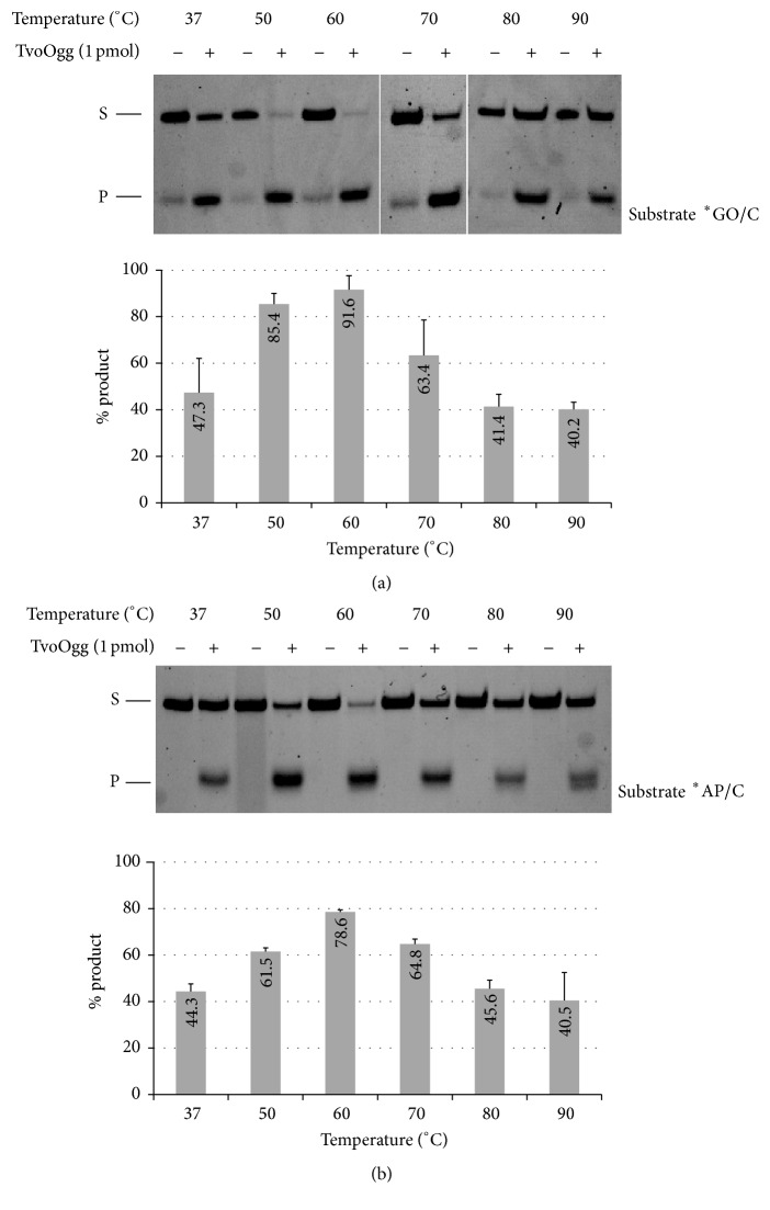 Temperature dependency of GO glycosylase activity (a), or AP lyase activity (b), in the presence (+) or absence (−) of 1 pmol of TvoOgg with a 34-bp heteroduplex DNA containing GO/C (a) or AP/C (b), respectively, mismatched at different temperatures for 30 min. The strand containing GO and AP was 5′-end labeled with FAM. The uncut 34-mer DNA substrate (S) and cleaved 13-mer product (P) were indicated on the left. The signal intensities of each product were measured and quantified with Pharos FX. Data are presented as the mean ± SD of three independent measurements. Asterisks indicate the 5′-end labeled strand.