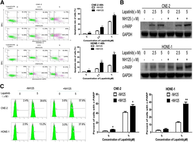 NH125 enhances lapatinib-induced apoptosis in NPC cells. a , b and c CNE-2 and HONE-1 cells were treated with lapatinib (0-5 μM) or DMSO control for 48 h in the presence or absence of 0.25 μM NH125. a Annexin V-APC/7-AAD double staining was performed to detect apoptotic activity. b Cleaved PARP was examined by Western blot analysis. GAPDH was used as a loading control. c Flow cytometry was used to analyse cleaved PARP levels. Results are displayed as histograms. Each bar represents the mean ± standard deviation. *, P