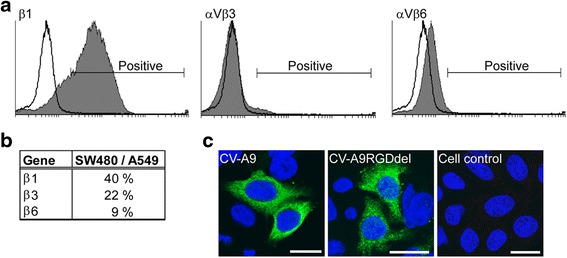 CV-A9 infection in the SW480 cell line is independent of an RGD and αV-integrins. a Fluorescence from flow cytometric analysis of <t>integrin</t> expression. SW480 cells were incubated with integrin specific monoclonal antibodies against β1, αVβ3 or <t>αVβ6</t> (cell controls as shown in a white plot were incubated with a secondary antibody) and 10,000 cells were measured in each sample. The data was analyzed by the Cyflogic program and the area of positive signal is indicated in a white plot. In the case of αVβ3 the white area is shadowed by the negative dark background. Standard threshold values were used in the assays. b The ratio (SW480/A549) of integrin mRNA levels measured by quantitative PCR is indicated. c Immunofluorescence images of SW480 cells infected with the wild type CV-A9 and with the RGD-deletion mutant (CV-A9RGDdel). Antibodies specific to CV-A9 ( green ) were used. The nuclei ( blue ) were stained with Hoechst. The scale bar = 20 μm