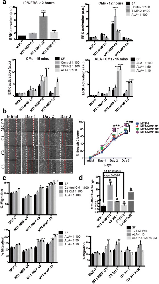 Low MT1-MMP/high TIMP-2 was optimal to promote migration and ERK activation in MCF-7 cells. a ERK activation in MCF-7 and MT1-MMP cells after incubation for 12 h (top) or 15 min ( bottom ) in media containing 10 % FBS or different dilutions of TIMP-2 or ALA + TIMP-2 CM in SF media. b Scratch closure migration assay of MCF-7 MT1-MMP cell lines monitored for 3 days. Shown are representative 10× fields of view. The white dotted lines indicate the initial scratch size; red dotted lines indicate the scratch size at the respective day. Scale bars = 100 μm. Line graph on the right shows scratch closure quantification that demonstrates significantly increased migratory potential of C3 cells. c Transwell migration assays of MCF-7 MT1-MMP cell lines incubated for 48 h in TIMP-2, or ALA + TIMP-2 CM diluted 1:100 ( top ), or ALA + TIMP-2 CM in increasing dilutions ( bottom ). d ( top ) qPCR analysis showing MT1-MMP mRNA from two cell lines derived from MT1-MMP C3 cells that stably express an shRNA construct targeting MT1-MMP, and one cell line stably expressing a control scrambled shRNA construct. Different letters indicate significant differences at p ≤ 0.05 by one-way ANOVA, Tukey's post-hoc test. Individual student's t-tests comparing MCF-7 cells against the C3 SH 1 cell line is also shown. ( bottom ) Transwell migration assay of MT1-MMP C3 cell lines incubated for 48 h in either TIMP-2 or ALA + TIMP-2 CM diluted 1:10, or ALA + TIMP2/U0126 (10 μm)