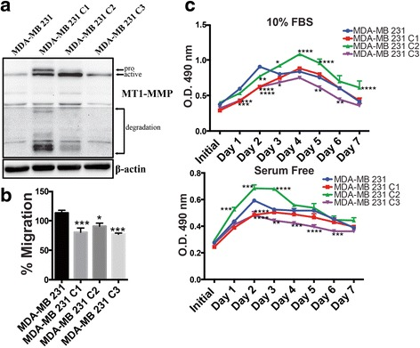 Overexpression of MT1-MMP in MDA-MB 231 cells negatively affected migration and viability ( a ) Immunoblot analysis (AB6004) showing pro-, active, and degradation forms of MT1-MMP in MDA-MB 231 breast cancer cells and three MDA-MB 231 cell lines expressing different levels of MT1-MMP . β-actin was used as a loading control. b Transwell migration assay of MDA-MB 231 MT1-MMP cells incubated in SF media for 12 h. c Viability of MDA-MB 231 MT1-MMP cell lines during incubation in media containing 10 % FBS ( top ) or serum free media ( bottom ) measured daily for 7 days using Celltiter96®