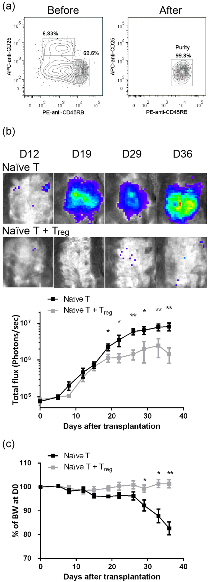 Early detection of autoimmune colitis by BLI analysis. ( a ) Percentages of CD4 + CD25 − CD45RB hi naïve T cells from Luc Tg. spleens before and after sorting are shown. ( b ) Continued BLI analysis of Luc-expressing, naïve T cell-transferred Rag1-ko mice. Rag1-ko host mice that received Luc-expressing naïve T cells or naïve T cells + CD4 + CD25 + CD45RB lo T reg cells were analyzed with IVIS twice a week. Abdominal BLIs were significantly detected at D12-D15 PAT and thereafter. Total influx at each time point after adoptive transfer is shown. ( c ) Changes of BW of Rag1-ko host mice after transfer of Luc-expressing naïve T cells. BW shown at each time point is normalized by the BW at D0. Data from four repeated experiments are combined (naïve T, n = 14; naïve T + T reg , n = 14) and represented by Means ± SEM. (* p