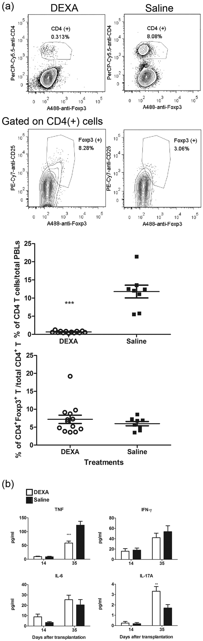 DEXA treatment reduced donor T cells survival and induced suppressive cytokine production in sera. ( a ) Reduction of Luc-expressing T cell expansion in PBLs from Rag1-ko mice that received naïve T cells and were treated with DEXA for three weeks. At D28 PAT, PBLs were s stained as described in Methods, and then analyzed by flow cytometry. Percentages of CD4 + T cells in total PBL and percentages of CD4 + Foxp3 + CD25 + T cells in CD4 + T cells are shown. ( b ) Sera were collected at D14 and D35 PAT and analyzed for serum TNF, IFN-γ, IL-6, and IL-17A production by CBA kits as described in Methods. Data from four repeated experiments are combined (DEXA, n = 16; saline, n = 12) and represented by Means ± SEM. (** p
