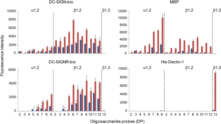 Carbohydrate microarray analysis of the interaction of C-type lectin receptors with CβG oligosaccharides. DC-SIGN-bio and DC-SIGNR-bio were tested at 50 µg mL −1 , serum MBP at 4 µg mL −1 and His-Dectin-1 at 20 µg/ml. The microarray consisted of lipid-linked gluco-oligosaccharide probes (AO-NGLs) printed in duplicate on nitrocellulose-coated glass slides. The linkage type and DP of the major component are indicated; their sequences are shown in Table I . The results are the means of fluorescence intensities of duplicate spots, printed at 2 and 5 fmol spot −1 (black and dark grey, respectively), and with the range indicated by error bars. This figure is available in black and white in print and in color at Glycobiology online.
