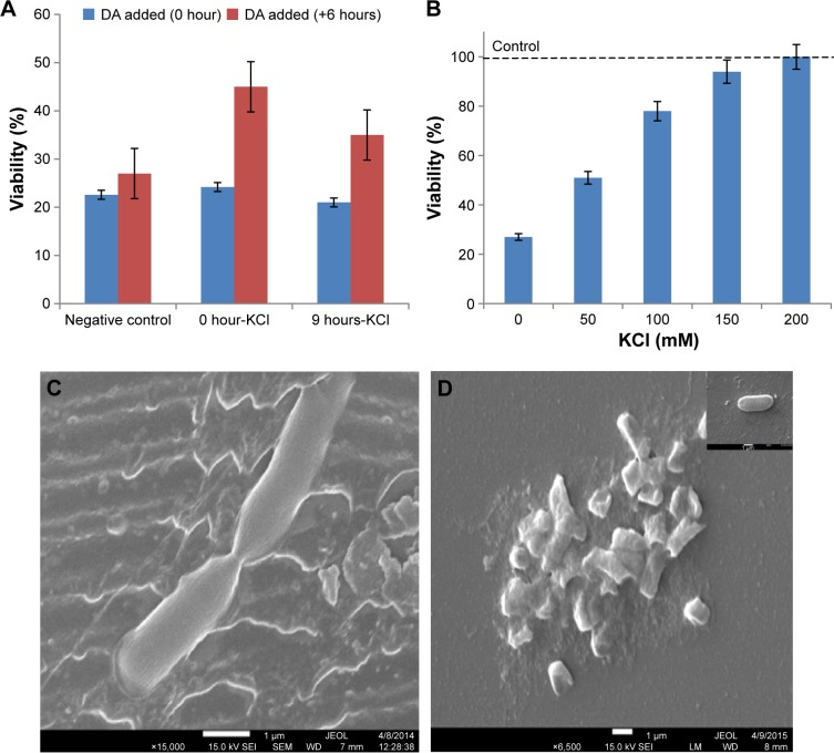 ( A ) Effects of adding KCl (50 mM) and DA (5 mg/L) to LB broth at different times of growth on the viability of EDL933. ( B ) Effects of increasing KCl concentration on the viability of EDL933 grown in LB–DA broth after 24 hours. ( C ) SEM image of dividing E. coli O157:H7 (inset shows the turgid state of the bacteria prior lysis). ( D ) SEM image of the split bacteria (inset shows membrane ghosts). Abbreviations: DA, diminazene aceturate; E. coli , Escherichia coli ; LB, Luria–Bertani; SEM, scanning electron microscopy.