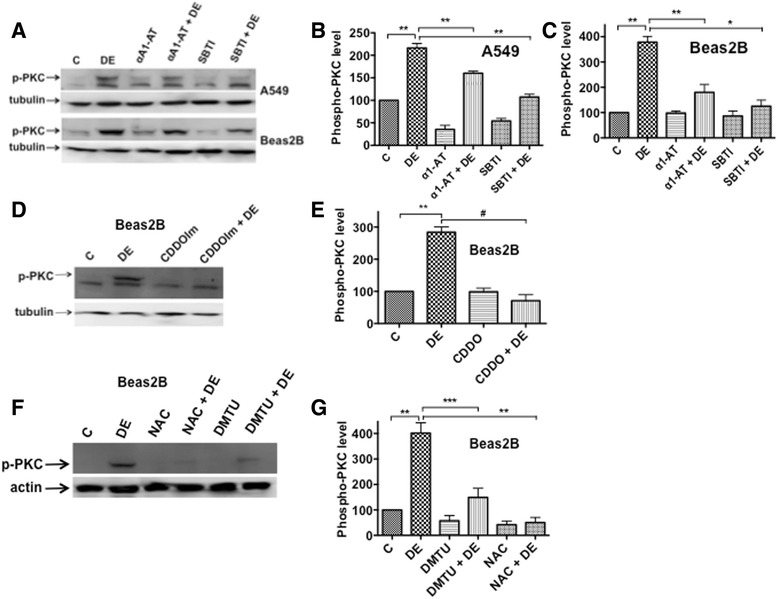 Effects of protease inhibitors and antioxidants on the activation of protein kinase C (PKC). a A549 or Beas2B cells were treated with medium (C), dust extract (1 %) (DE), α1-antitrypsin (25 μg/ml) (α1-AT) or soybean trypsin inhibitor (25 μg/ml) (SBTI) alone, or a combination of DE with α1-AT or SBTI for 5 min. A representative Western blot depicting the levels of phosphorylated PKC and tubulin is shown. b and c Quantification of the effects of α1-AT and SBTI on phosphorylated PKC levels. Levels of phosphorylated PKC and tubulin were quantified and phosphorylated PKC levels normalized to tubulin levels. Levels of phosphorylated PKC in cells treated with medium (C) were arbitrarily considered as 100, and data are shown as means ± SE ( n = 3). * P