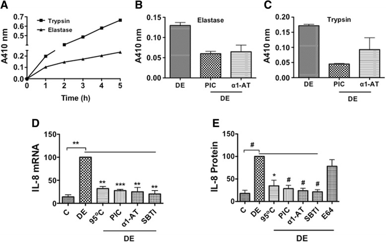 Protease activities in dust extract and the effects of protease inhibitors and heating on IL-8 mRNA and protein levels. a Trypsin and elastase activities in dust extract were measured using BAPNA and SAPNA substrates, respectively. Dust extract (5 μl) was mixed with BAPNA (0.92 mM) or SAPNA (0.37 mM) in a final volume of 200 μl of 0.1 M Tris-HCl 8.0 or 0.1 M Tris-HCl 8.3, incubated at room temperature and absorbance at 410 nm recorded at indicated times. Data shown are average of duplicate measurements. Similar results were obtained in a second independent experiment. b and c Trypsin and elastase activities were measured in the presence of protease inhibitor cocktail (0.5 ×) or α1-antitrypsin (10 μg) (α1-AT). Data shown are means ± SD of two independent experiments. d A549 cells were treated with medium (C), dust extract (0.25 %) (DE), dust extract (0.25 %) that was heated at 95 °C for 10 min, or dust extract (0.25 %) in the presence of 2 μl protease inhibitor cocktail (PIC), 10 μg/ml α1-antitrypsin (α1-AT), or 10 μg/ml soybean trypsin inhibitor (SBTI) for 3 h and IL-8 mRNA levels determined by qRT-PCR. IL-8 mRNA levels in dust extract treated cells were arbitrarily considered as 100, and relative IL-8 mRNA levels in other treatments are shown. Data shown are means ± SE ( n = 3). ** P
