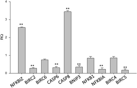 RF-Id -regulated genes in U87MG cells. RNA was prepared from unexposed U87MG cells and exposed to RF-Id for 72 h. Data were normalized using GAPDH, 18S and ACTB genes as internal control. Three biological replicates were performed per group. Relative expression of the transcripts was measured by using <t>ViiA7™Real-Time</t> <t>PCR</t> software. Bars, SDs.** p ≤ 0.01