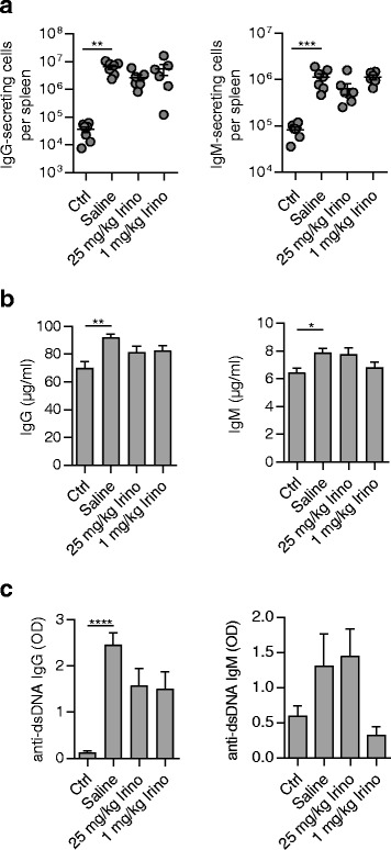 Decreased anti-double-stranded DNA ( dsDNA ) IgM in MRL/ lpr mice treated with low-dose irinotecan ( Irino ). MRL/ lpr mice receiving saline ( n = 7), 25 mg/kg irinotecan ( n = 6), or 1 mg/kg irinotecan ( n = 6) were sacrificed at 18 weeks of age. MRL/MpJ mice treated with saline ( n = 7) were used as controls ( Ctrl ). a Number of IgG- and IgM-secreting cells in the spleen determined by enzyme-linked immunosorbent spot assay. b Plasma levels of total IgG and IgM and c anti-dsDNA-specific IgG and IgM were measured by enzyme-linked immunosorbent assay. In ( a ), each symbol represents an individual mouse; bars show mean ± SEM. * P