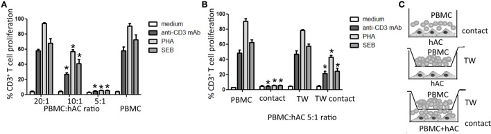 Human articular condrocyte (hAC) regulate T cell proliferation . (A) T cell proliferation of CD3 + T cells with the indicated stimuli at different PBMC:hAC ratio (20:1, 10:1, 5:1) or PBMC alone (medium). (B) T cell proliferation of PBMC on hAC at the PBMC:hAC ratio of 5:1 in contact or separated by a Millicell transwell chamber (TW, PBMC in TW) or by PBMC in TW separated by a co-cultures of PBMC and hAC (TW-contact). Results are the mean ± SD of eight different experiments. (C) Schematic representation of the different culture conditions: contact (A,B) , TW (B) , and TW-Contact (B) . * p