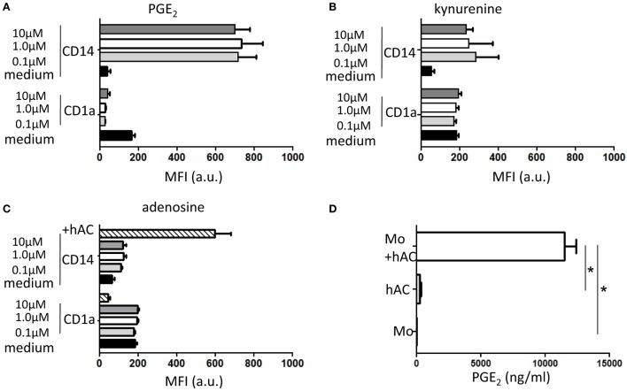 Effect of PGE 2 , kynurenine, and adenosine on differentiation of Mo to iDC and presence of PGE 2 in conditioned media of hAC–Mo co-cultures . To determine the effect on the expression of exogeneous PGE 2 (A) or kynurenine (B) or adenosine (C) , Mo from PBMC were induced to differentiate to iDC with GM-CSF and IL-4 and incubated starting at the onset of culture with different doses (as indicated) of these three drugs. The expression of CD1a and CD14 antigens were assessed with direct immunofluorescence using CD1a–FITC and CD14PE–Cy7 mAbs on day 6 of culture. Medium indicates the expression of CD1a and CD14 in cultures without the addition of any drug and it represents the typical differentiation of Mo to iDC. In (C) , lined bar represents the expression of CD1a and CD14 in co-cultures with hAC showing the impairment in Mo differentiation to iDC. Results are shown as mean of fluorescence intensity of each marker and are the mean ± SD of three independent experiments for each drug. (D) The conditioned media (CM) from Mo co-cultured with hAC with GM-CSF and IL-4 was harvested on day 4 of culture and analyzed for the presence of PGE 2 using a specific ELISA. The amount of PGE 2 in CM from hAC or Mo is shown for comparison. Results are the mean ± SD of determination of three independent experiments. * p