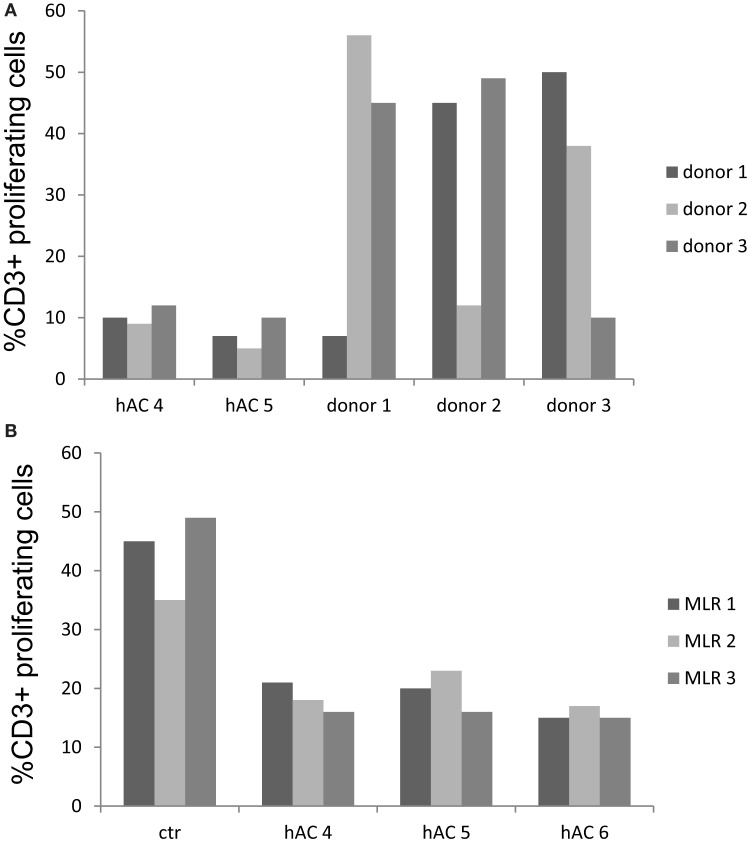Human AC do not stimulate allo-response and inhibit MLR as a third party . (A) Allogeneic hAC were used as stimulator of PBMC of three donors labeled with CFSE at the PBMC:hAC ratio of 10:1. Proliferation was evaluated at day 7 and it was assessed as decrement of CFSE content in CD3 + T cells (identified by indirect immunofluorescence with anti-CD3 mAb UCHT-1 followed by goat APC-conjugated anti-mouse isotype specific antiserum). Results are expressed as % of CD3 + T cells with decrement of CFSE content compared to PBMC cultured alone. MLR between the three different PBMC donors was shown for comparison to define whether PBMC can indeed proliferate upon allo-recognition. (B) Regulation of MLR with hAC as a third party. MLR were set up in the presence of hAC (as a third party) at the responder PBMC:hAC ratio of 10:1 and proliferation evaluated as in (A) as decrement of CFSE content in CD3 + responder T cells. Ctr: level of proliferation of CD3 + T cell in the MLR. Results are expressed as % of CD3 + T cells with decrement of CFSE content. Responder PBMC cultured alone showed a proliferation of 3–7%.