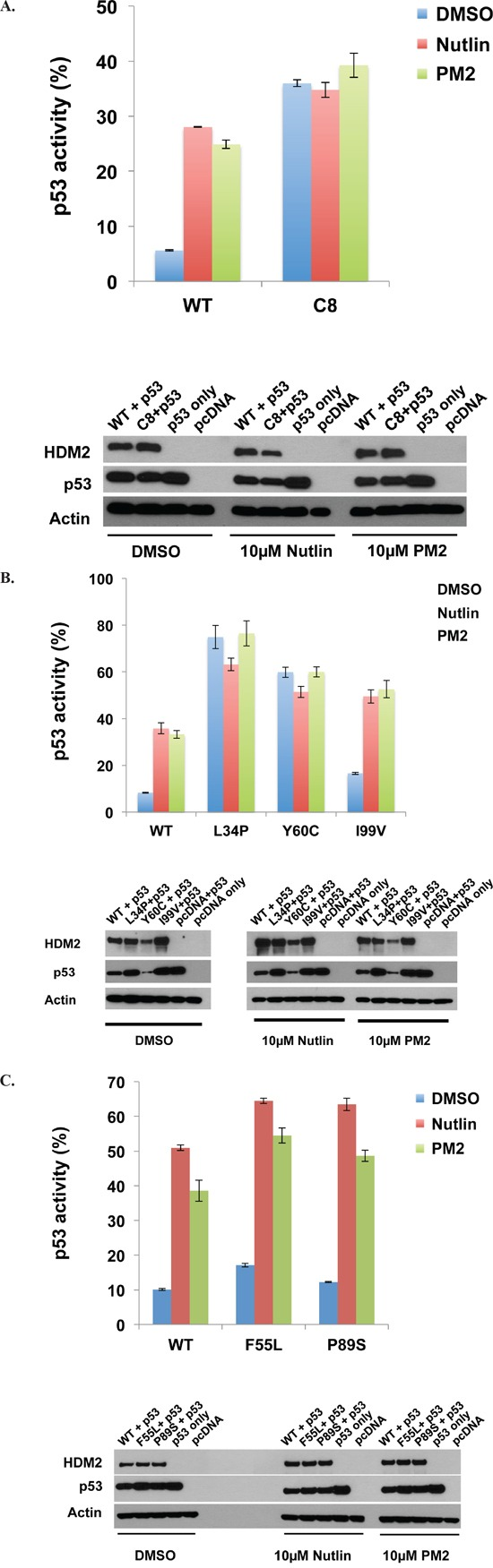 PM2 shows reduced inhibition of selected HDM2 variants in p53/MDM2-null DKO cells A. Wild-type and HDM2-C8 (full-length) were co-transfected with p53 and p53-reporter gene, and reporter gene activity measured in the presence of PM2 (20 μM) or Nutlin (10 μM). p53 activity is denoted as percentage of that observed when p53-alone co-transfected with reporter gene. Shown below are Western blots indicating expression levels of HDM2 variants and p53 cotransfected into DKO cells. B and C. As in 'A', with wild-type HDM2 and indicated HDM2-C8 derived point mutants (full length) co-transfected into DKO cells. p53 activity is denoted as percentage of that observed when p53-alone co-transfected with reporter gene. Shown below are Western blots indicating expression levels of HDM2 variants and p53 cotransfected into DKO cells.