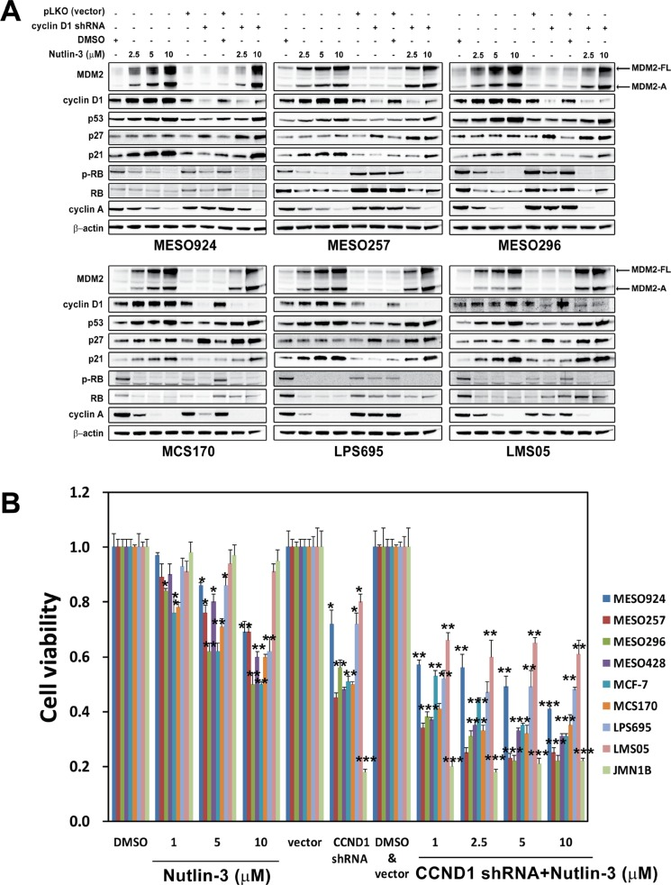 Additive effects were observed through coordinated inhibition of MDM2-p53 interaction and cyclin D1 as demonstrated by immunoblotting (A) and cell viability (B), showing that combination of MDM2 inhibition and cyclin D1 knockdown had greater anti-proliferative effects, compared to either intervention alone in mesothelioma cell lines (MESO924, MESO257, MESO296, MESO428, and JMN1B), a breast cancer cell line (MCF-7), a chondrosarcoma (MCS170), a liposarcoma cell line (LPS695), and a leiomyosarcoma cell line (LMS05) (A) MDM2, cyclin D1, p53, p27, p21, phospho-RB, RB, and cyclin A were evaluated by immunoblotting after treatment with Nutlin-3 for 48 hours and infection with lentiviral CCND1 shRNA for 72 hours. Actin staining is a loading control. (B) Cell viability evaluated by a Cell-titer Glo ® ATP-based luminescence assay in these cell lines, after treatment with Nutlin-3 for 48 hours and infection with lentiviral CCND1 shRNA for 72 hours. Data were normalized to the empty vector infections, DMSO, or vector and DMSO, and represent the mean values (± s.d.) from quadruplicate cultures. Statistically significant differences between DMSO and Nutlin-3, empty vector control and target gene shRNAs are presented as * p