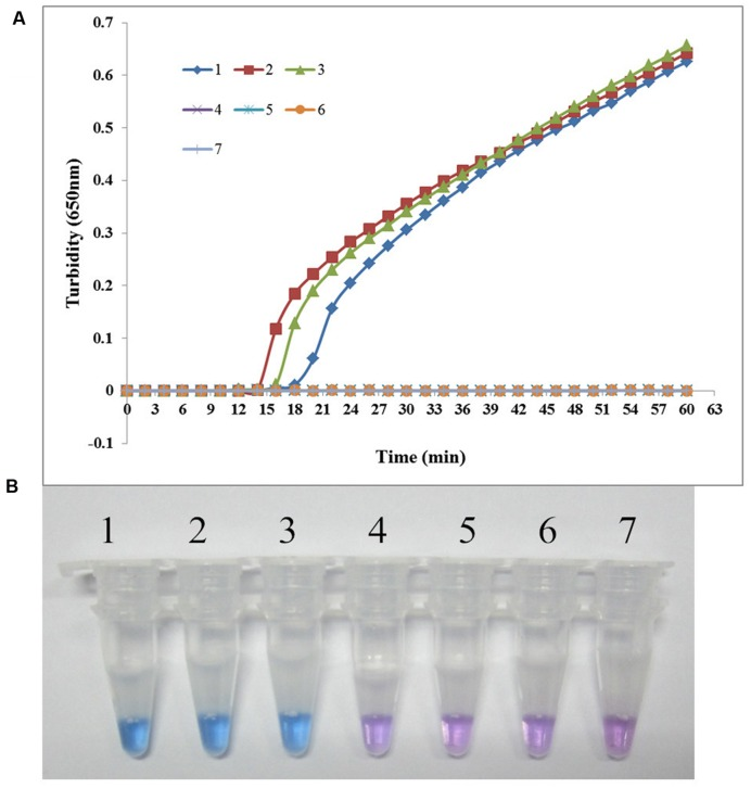 Specificity of the LAMP reaction for detecting sul1 in S. maltophilia . (A) Turbidity was monitored every 6 s using a Loopamp Realtime Turbidimeter with detection at 650 nm. The reaction was performed at 65°C. (B) The results were visualized by adding HNB to the reaction mixture before the reaction. (1) X2 (positive control for sul1 from Peking Union Medical College Hospital); (2) P121 (positive control for sul1 from Chinese PLA General Hospital); (3) K106 (positive control for sul1 from Chinese PLA General Hospital); (4) S. maltophilia K279a; (5) S. maltophilia ATCC 13637; (6) P129 (negative control for sul from Chinese PLA General Hospital, confirmed by genome sequencing); (7) double-distilled water.