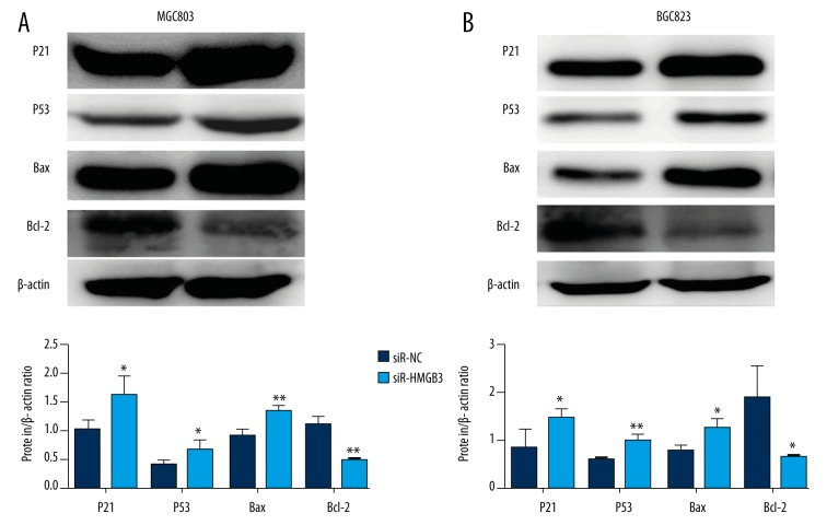 ( A, B ) Protein expression levels of p21, p53, Bax, and Bcl-2 were detected by Western blot assays and compared by quantitative analysis of the gray value. * p