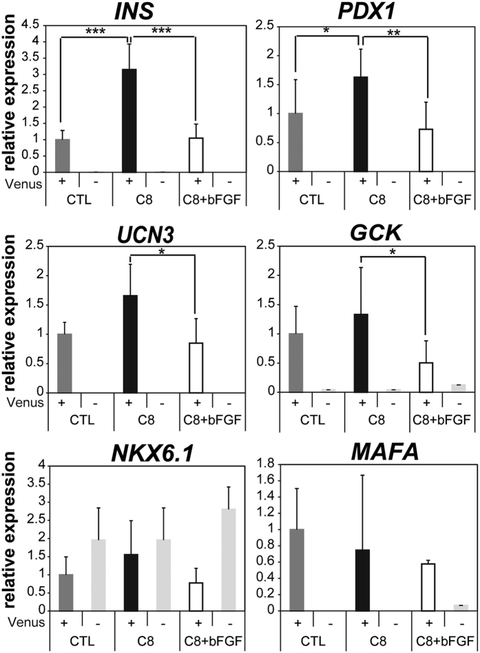 C8 augments important maturation markers specifically in INS-producing β cells. Quantitative RT-PCR analysis was performed to measure the relative expression levels of the β cell lineage markers INS , UCN3 , and GCK and the transcription factors PDX1 , NKX6.1 , and MAFA from sorted Venus+ and NC cells with or without treatment with C8 and/or bFGF. Briefly, #9–15 hiPSCs were differentiated as described above and treated with 5 μM C8 or 5 μM C8 and 50 ng/mL bFGF in the third stage of differentiation. After differentiation, samples were dissociated with TrypLE and sorted with an <t>SH800Z</t> cell sorter (Sony) for Venus+ and NC cells. Fifty cells from each group were sorted into 5 μL FCP reagent, which is a lysate reagent of the QIAGEN Fast Lane cDNA kit. For cDNA synthesis, 2 μL of the samples were used, with 0.5 μL of the 10 μL cDNA samples used for quantitative RT-PCR. Error bars indicate SD, n = 3. *p