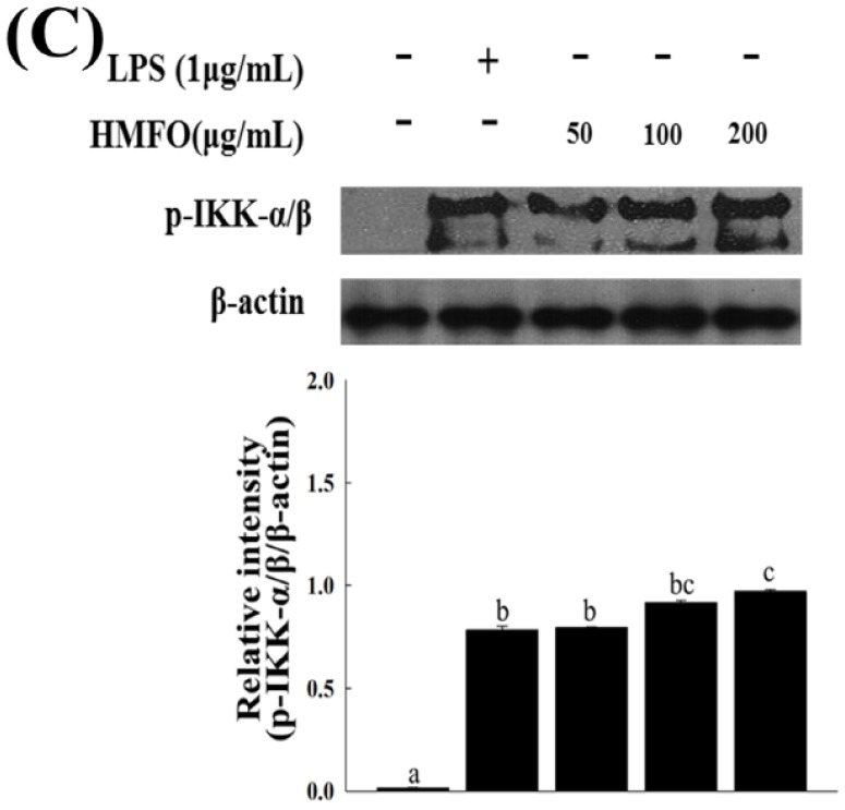 HMFO-induced nuclear factor kappa B (NF-κB) activation by the phosphorylation of inhibitor of kappa B <t>(IκB)-α</t> and IκB kinase <t>(IKK)-α/β</t> in RAW 264.7 macrophages. Cells were stimulated with HMFO (50, 100, or 200 μg/mL) or LPS (1 μg/mL). ( A ) Nuclear extracts (N) were isolated from cells stimulated with HMFO or LPS. Level of p65 in the nuclear fractions was determined by immunoblotting analysis; ( B , C ) Phosphorylated IκB-α and IKKα/β isolated from cell lysates were determined by immunoblotting analysis. β-actin was used as an internal control. Values with the different letters are significantly different ( p