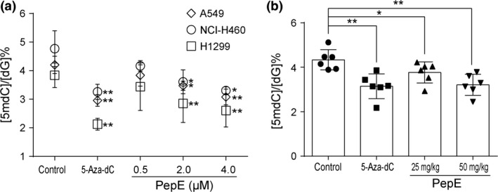 Effect of peperomin E (PepE) on global DNA methylation in non‐small‐cell lung cancer cells in vitro and in vivo . (a) Effects of PepE and 5‐Aza‐dC on global DNA methylation levels in NSCLC cells. DMSO served as control; and (b) Effects of PepE and 5‐Aza‐dC on the global DNA methylation levels in A549 tumor tissues extracted from nude mice. Data are presented as means ± SD ( n = 3 for a; n = 6 for b). * P