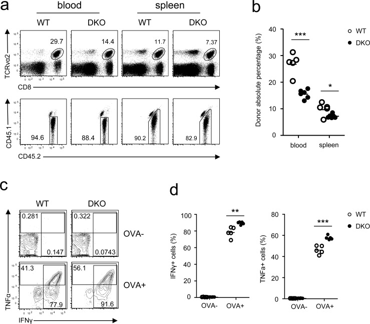 Effects of DGKα and ζ double deficiency on memory CD8 T cell responses WT and DKO memory OT1 T cells sorted from splenocytes of recipients on day 35 after LM-OVA infection were transferred into secondary recipients (1 × 10 4 /mouse), which were subsequently infected by LM-OVA 18 hours after transfer. a. Representative dot plots and percentages b. of WT and DKO donor-derived CD45.1 − CD45.2 + memory OT1 cells in PBLs and splenocytes in secondary recipients 7 days postinfection. c. - d. Splenocytes from secondary recipients were stimulated with SIINFEKL peptide in the presence of GolgiPlug for 5 hours, followed by cell surface and intracellular staining and FACS analysis. Representative contour plots c. and percentages of IFNγ + or TNFα + cells d. of donor-derived WT and DKO memory OT1 T cells are shown. Data shown represent two independent experiments. *, P