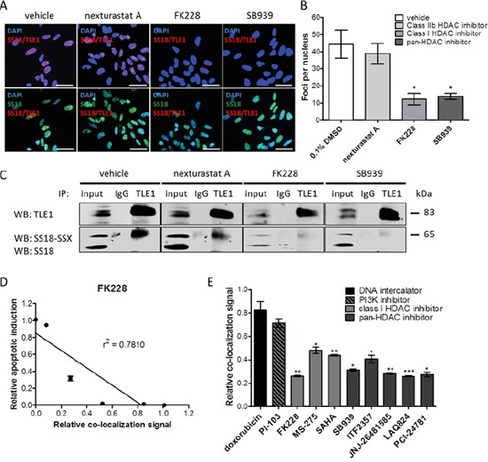HDAC inhibitors disrupt SS18-SSX/TLE1 co-localization A significant decrease in detectable PLA signal following HDAC inhibition in SYO-1 cells A, B. is also confirmed by immunoprecipitation C. The decrease in PLA co-localization signal correlates with apoptosis induction by HDAC inhibitor FK228 in SYO-1 cells D. A panel of cytotoxic compounds and HDAC1/3 inhibitors were screened on SYO-1 cell at IC 50 doses for 12 hours. While all compounds were effective in decreasing cell viability, only compounds inhibiting class I HDACs were found to decrease the PLA nuclear signal, as a result of disrupting SS18-SSX/TLE1 co-localization E. Scale bars represent 20 μm. Statistical significance compared to vehicle treatment controls was determined by Student t test: * denotes p