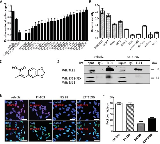 The PLA assay can be used for high-throughput drug screening for targeted compounds in synovial sarcoma From a 16 000 compound small molecule drug library, a compound designated SXT1596 was recognized to significantly decrease relative co-localization of SS18-SSX/TLE1 in human synovial sarcoma cells A. SXT1596 selectively decreases cell viability in synovial sarcoma cell lines, SYO-1, FUJI, Yamato-SS, HS-SY-II, YaFuss and MoJo (white bars), when compared to negative control cell lines HEK293T, MCF7, HeLa and A673 (shaded bars) at a concentration of 5 μM B. Negative control cell lines HeLa and A673 are sensitive to SXT1596 at higher doses. SXT1596 (5-(2-Nitro-1-propenyl)-1,3-benzodioxole) (structure shown in C. ) mediated disruption of the SS18-SSX/TLE1 association was confirmed by <t>immunoprecipitation</t> D. Nuclear SS18-SSX/TLE1 PLA signal in SYO-1 cells decreased following SXT1596 treatment to a degree similar to that obtained with the HDAC inhibitor FK228 E, F. Statistical significance compared to vehicle treatment controls was determined by Student t test: * denotes p