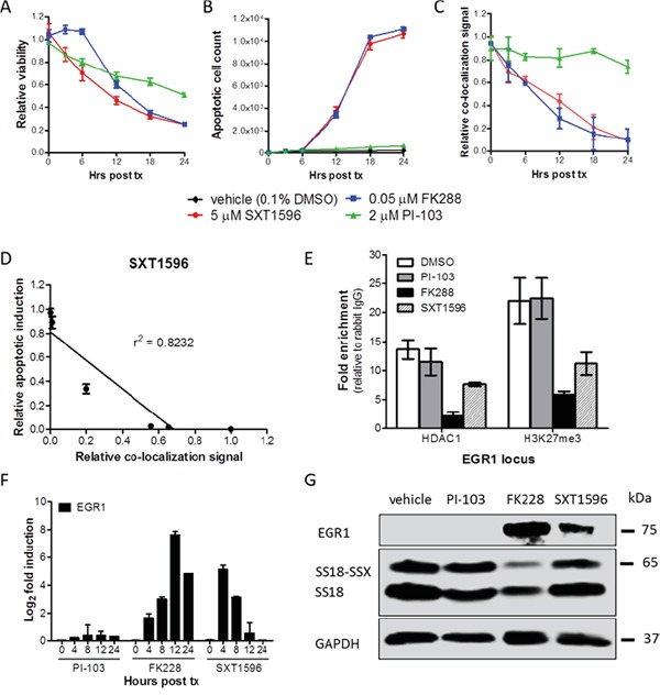 SXT1596 decreases cell viability and reactivates EGR1 expression in synovial sarcoma The small molecule SXT1596 induces apoptosis at a similar rate to that of HDAC inhibitor FK228 in SYO-1 cells A, B. and brings about a consistent decrease in SS18-SSX/TLE1 PLA co-localization signal in SYO-1 cells C. The induction of apoptosis correlates with the decrease in PLA co-localization signal D. Chromatin immunoprecipitation at the EGR1 promoter reveals a decrease in H3K27me3 enrichment following SXT1596 treatment E. SXT1596 reactivates EGR1 expression, at the RNA F. and protein G. level. Error bars represent standard error of mean from conditions performed in triplicate. Linear regression was measured by goodness of fit calculations in Prism Graphpad.