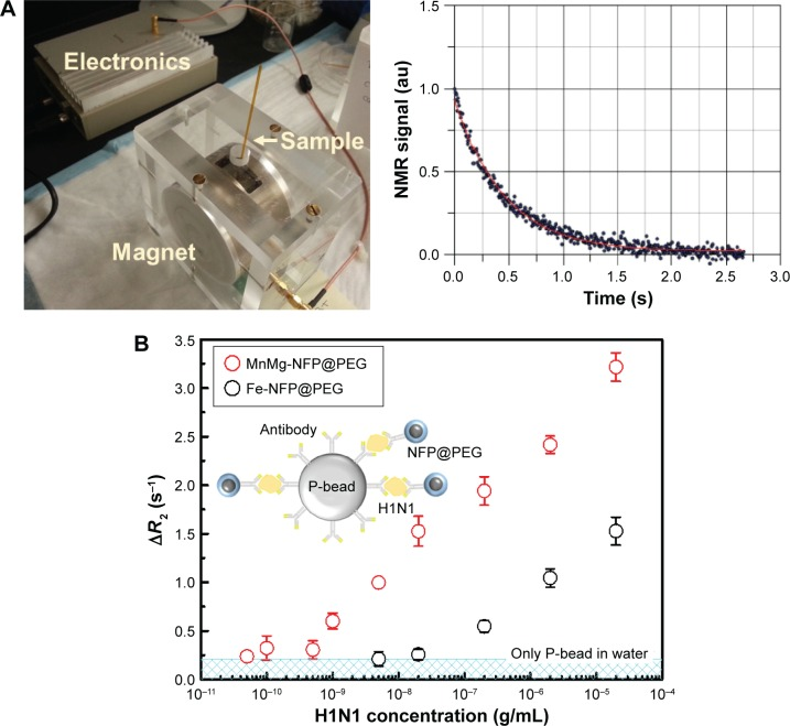 ( A ) Miniaturized NMR system and representative measured NMR signal (T2 time). ( B ) Detection results of influenza A H1N1 nucleoprotein using the miniaturized NMR system with MnMg-NFPs@PEG and Fe-NFPs@PEG. The MnMg-NFPs@PEG and Fe-NFPs@PEG are conjugated with the detection antibodies and used as an NMR agent. The polystyrene bead is conjugated with the capture antibodies. Abbreviations: NMR, nuclear magnetic resonance; NFP, nanoferrite particle; PEG, polyethylene glycol.