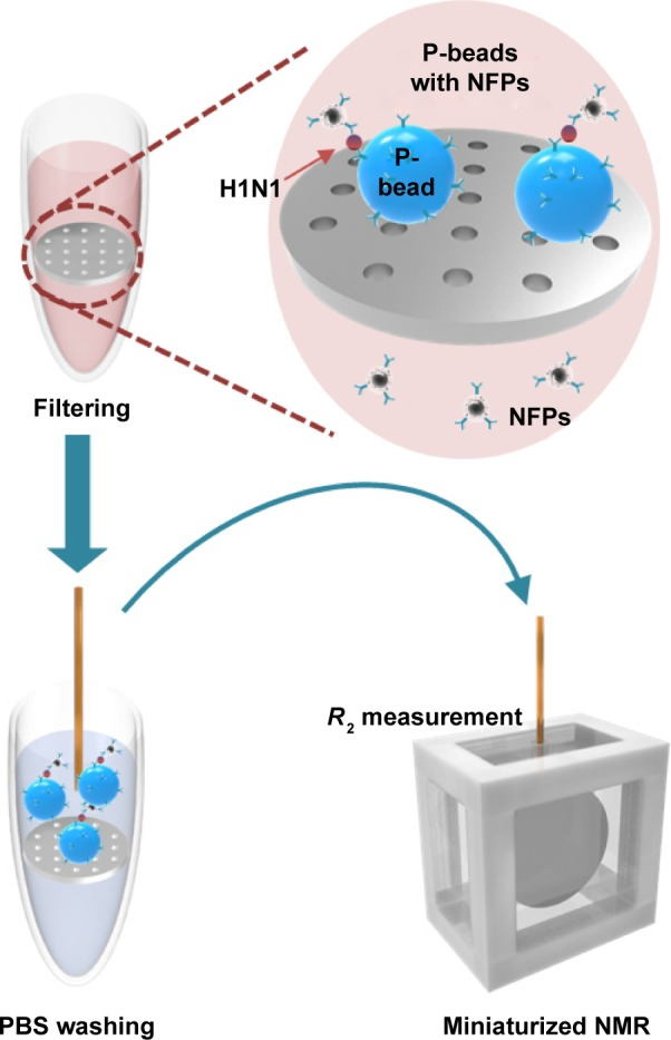 Schematic illustration to show the detecting procedure for the influenza A H1N1 nucleoprotein using the miniaturized NMR system. Abbreviations: NMR, nuclear magnetic resonance; NFP, nanoferrite particle; PBS, phosphate-buffered saline.