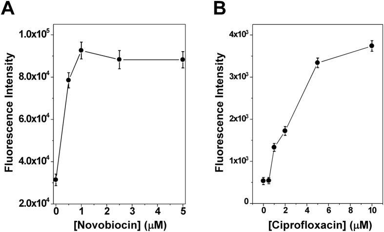 DNA gyrase was potently inhibited by novobiocin ( A ) and ciprofloxacin ( B ). For DNA supercoiling reactions, 60 μL μL of 1 × gyrase buffer containing 670 ng of of rx pAB1_FL905 was prepared and equilibrated to 37 °C. 20 units of DNA gyrase was used to supercoil the rx pAB1_FL905 in the presence of different concentrations of novobiocin and ciprofloxacin. The fluorescence intensity at λem = 521 nm was monitor with λex = 494 nm. The inhibition IC50 was estimated to be 0.48 ± 0.14 and 2.57 ± 1.b μM for novobiocin and ciprofloxacin, respectively.