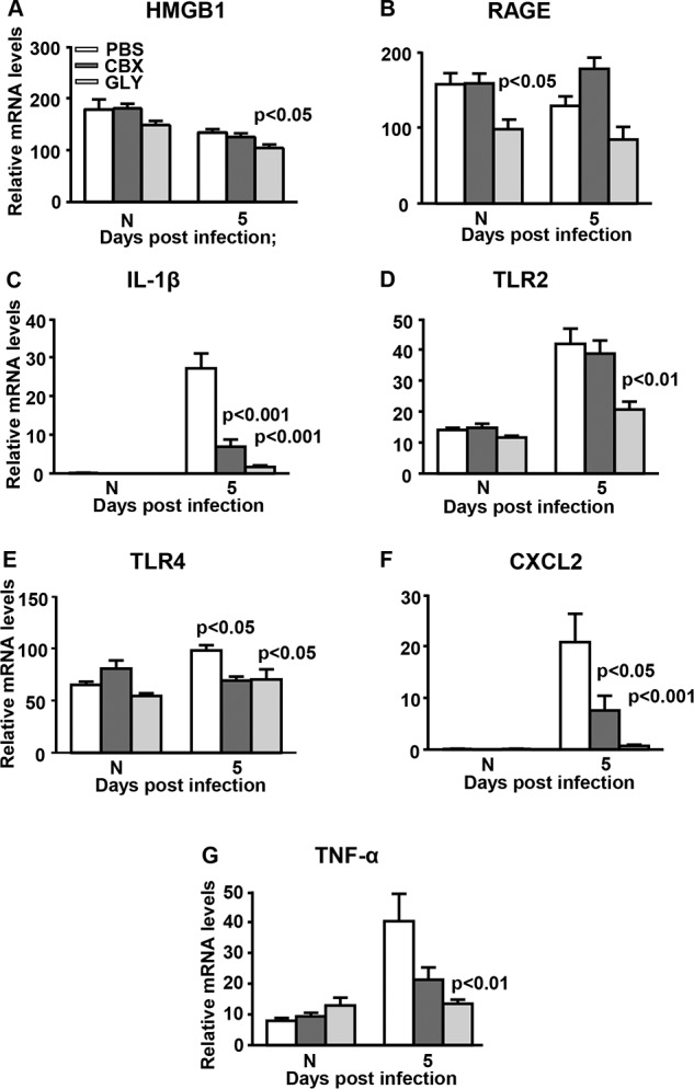 Real-time RT-PCR after infection with KEI 1025. ( A – G ) At 5 days PI, corneal mRNA levels of HMGB1 ( A ), TLR2 ( D ), and TNF-α ( G ) were reduced significantly only in GLY-treated corneas; RAGE ( B ) was not different statistically between groups; IL-1β ( C ), TLR4 ( E ), and CXCL2 ( F ) were reduced significantly after GLY and CBX versus PBS treatment. No difference in mRNA levels was seen for normal uninfected (N) cornea except the significant reduction for RAGE ( B ) in GLY-treated mice. Data are mean + SEM analyzed using 1-way ANOVA followed by the Bonferroni's multiple comparison test. n = 10/group/time.