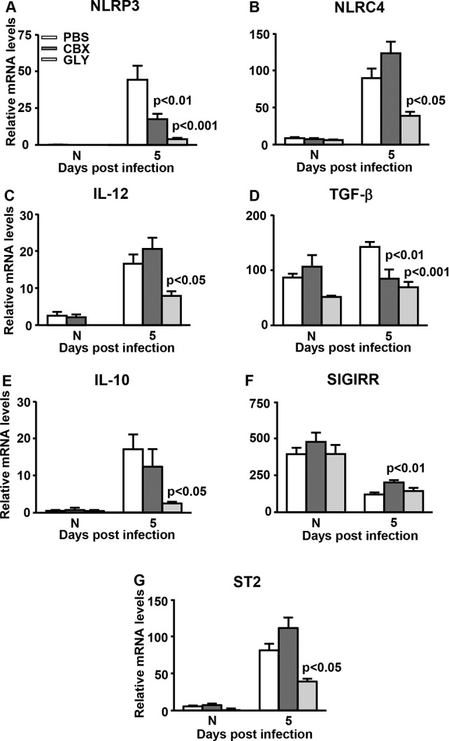 Real-time RT-PCR after infection with KEI 1025. At 5 days PI, corneal mRNA levels of: NLRP3 ( A ) and TGF-β ( D ) were reduced significantly after GLY or CBX treatment; NLRC4 ( B ), IL-12 ( C ), IL-10 ( E ), and ST2 ( G ) were reduced significantly only after GLY treatment; SIGIRR ( F ) was increased significantly only with CBX treatment. No difference between groups was seen for normal uninfected cornea. All data are mean + SEM and were analyzed using 1-way ANOVA followed by the Bonferroni's multiple comparison test. n = 10/group/time.