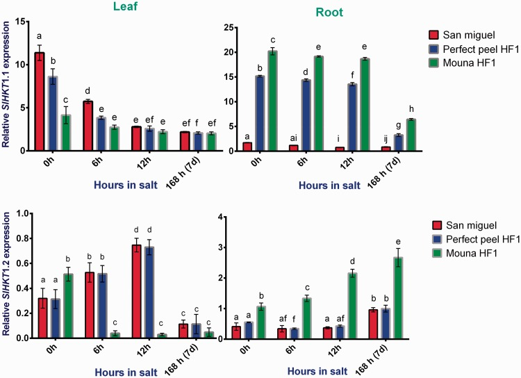 Relative gene expression of tomato HKT1;1 and HKT1;2 in response to salt stress in leaves and roots San Miguel, Perfect peel HF1 and Mouna HF1 genotypes. Total RNA was purified from tissues of tomato plants treated with 150 mM NaCl for 0 h, 6 h, 12 h and 7 days. Transcript level was analyzed by qRT-PCR using primers indicated in Table 1 . Tomato Actin gene was used as reference gene. Error bars show the standard error between three replicates performed. Bars with different letters within each panel are significantly different at P > 0.05 according to Tukey's test.