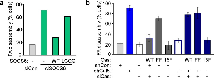 Regulation of FA disassembly requires SOCS6 interaction with CRL5 and Cas. Microtubule-dependent FA disassembly was assayed in transfected HeLa cells, scoring the percent of cells lacking FAs at 30 min after nocodazole reversal. ( a ) Rescue of normal FA disassembly by expression of siRNA-resistant mouse SOCS6 wildtype (WT) but not by SOCS box mutant LCQQ. ( b ) Expression of CasFF, a mutant that does not bind SOCS6, stimulates FA disassembly independent of Cul5, while wildtype Cas only stimulates disassembly when Cul5 is absent and Cas15F, which is unable to bind downstream signaling molecules, is inactive. Mean and standard deviation of two experiments. DOI: http://dx.doi.org/10.7554/eLife.17440.016