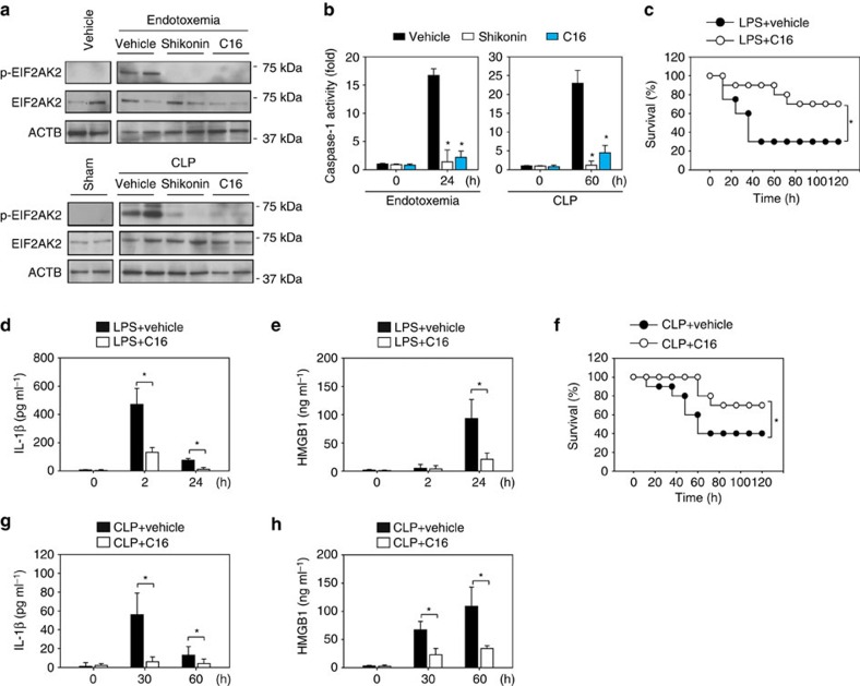 Pharmacological inhibition of the PKM2 pathway protects septic mice. ( a , b ) p-EIF2AK2, EIF2AK2 and caspase-1 activity were assayed in isolated PMs from mice during endotoxemia or polymicrobial sepsis in the absence or presence of shikonin (8 mg kg − 1 ) or C16 (50 μg kg − 1 ). In addition, the protein levels of p-EIF2AK2 and EIF2AK2 were assayed in PMs from mice with vehicle (no LPS) injection or sham operated for CLP. ( c ) Mice ( n =20 mice per group) were injected with a single dose of C16 (8 mg kg − 1 ), followed 30 min later by an infusion of endotoxin (LPS, 5 mg kg − 1 , intraperitoneally), and were then re-treated with C16 12 and 24 h later. The Kaplan–Meyer method was used to compare differences in survival rates between groups (* P