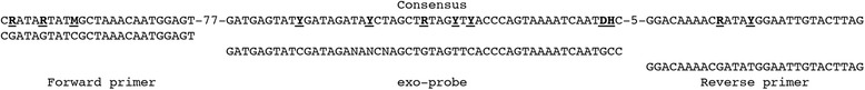 Alignment of the LSDV RPA primers and exo-probe sequences with the consensus sequence of 132 capripoxviruses GPCR genes downloaded from Genbank (Geneious® 6.1.5, Biomatters Limited, New Zealand). Mismatches are indicated in bold and underlined. NNN are sites of the quencher and fluropohore in following order (BHQ1-dT) (Tetrahydrofuran) (FAM-dT). R is A or G; Y, C or T; M, A or C; D, A or G or T; H, A or C or T