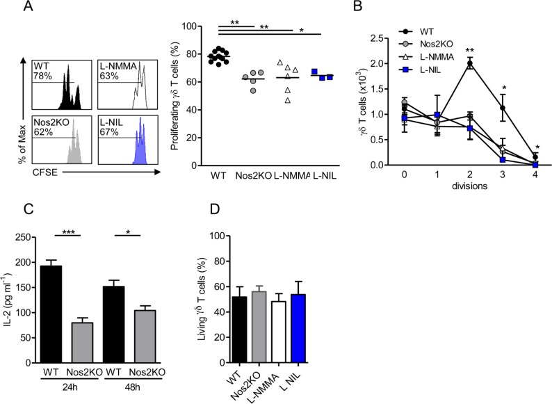 Effect of autocrine NOS2-derived NO on γδ T cell proliferation. γδ T cells sorted from pLNs of WT or Nos2KO mice and labeled with CFSE were cultured for 2 days in presence of CD3- and CD28-specific antibodies, 0,5 mM <t>L-NIL</t> and 10 mM <t>L-NMMA</t> when indicated. (A) Representative histograms of CFSE dilution. Numbers above line on CFSE plots indicate percent of proliferating cells (left). Percentages of γδ T cell proliferation undergoing division (right). (B) Number of γδ T cells by division. (C) IL-2 levels quantified in supernatants by ELISA after 24h and 48h of γδ T cell cultures. (D) Proportion of living γδ T cells after 48h culture. Data are from five independent experiments with 12 WT, 5 Nos2KO, 3 L-NIL and 6 L-NMMA replicates. Point represents individual replicate, bars mean ± SEM (except in B right mean) * p