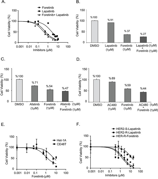 Effect of AXL and HER2 inhibitors on ESCC cells A. Dose-inhibition curves of CE48T ESCC cells in response to indicated concentration of lapatinib, foretinib, or foretinib plus lapatinib. The respective IC 50 values were 1.891 μM, 0.443 μM and 0.296 μM. B-D. Synergistic effects of foretinib and HER2 inhibitors on the cytotoxicities of ESCC. Cell viability of ESCC cells treated by 1 μM of foretinib, or 1 μM of HER2 inhibitors, or foretinib plus HER2 inhibitor. The HER2 inhibitors included 1 μM of lapatinib B. or 1 μM of afatinib C. or 1 μM of AC480 D. E. Relative cell viabilities of Het-1A and CE48T cells treated with indicated concentration of foretinib. The IC 50 values were 3.836 μM vs. 0.823 μM for Het-1A and CE48T cells respectively. F. Dose-response curves for HER2-sensitive (HER2-S) and HER2-resistant (HER2-R) ESCC cells in response to increased concentrations of lapatinib or foretinib.