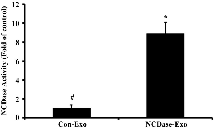Neutral ceramidase‐Exos have a higher NCD ase activity than Con‐Exos. Exosomes from INS ‐1 cells transfected with <t>pEGFP</t> ‐C3‐ NCD ase ( NCD ase‐Exo) had higher NCD ase activity compared with the exosomes from INS ‐1 cells transfected with the control vector pEGFP ‐C3 (Con‐Exo), # vs. *: P